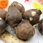 bulbe amaryllis TOP 10 image 1 produit