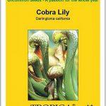 Carnivoren Tropica Lot de 10 semences de plante cobra (Darlingtonia california) avec milieu de culture de la marque Carnivoren image 2 produit