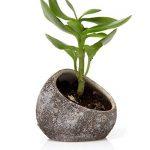 Chive–Koski, petite ovale fabriquée à la main en céramique Air Plante, Tillandsia, support de Bromeliad et Succulente et récipient de cactus, Bulk Lot de 3, 1PC chaque Blanc, Marron chocolat, Noir de la marque Chive image 2 produit