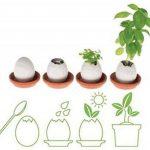 Eggling herbe aromatique - Menthe de la marque HCM Kinzel image 3 produit