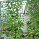 Everpert en nylon durable Treillis Net Filet de jardin support pour plantes pour plantes grimpantes de la marque Everpert image 2 produit