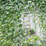 Everpert en nylon durable Treillis Net Filet de jardin support pour plantes pour plantes grimpantes de la marque Everpert image 3 produit
