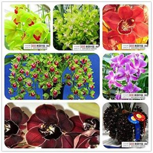 Exclus Succulent Plant Pot SeedsAndPlants Graine Plante Jardin Lily Bulbes Légumes Graines Graines de fleurs Allium Giganteum Jardim de la marque SVI image 0 produit
