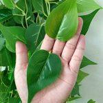 Fleurs Fleurs artificielles plantes grimpantes Plantes Chlorophytum Suspension Simulation de décoration fleur en Plastique Panier Rotin vigne pendaison Pot vert de la marque WANG-shunlida image 5 produit