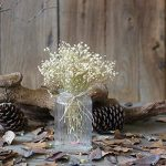 FNKDOR Gypsophila naturel séché fleur bébé souffle Home Decor Sky Star-cadeau paquet (blanc) de la marque FNKDOR image 2 produit