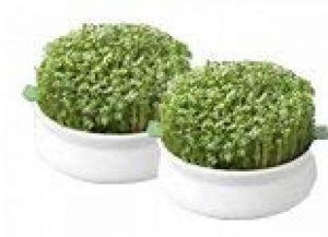 Germline - Germoir - Coupelle de germination - lot de 2 de la marque Germline image 0 produit