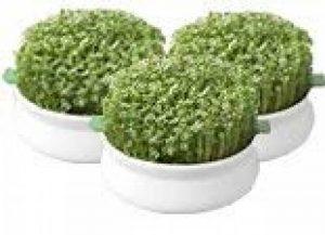 Germline - Germoir - Coupelle de germination - lot de 3 de la marque Germline image 0 produit