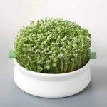 Germline - Germoir - Coupelle de germination - lot de 3 de la marque Germline image 1 produit