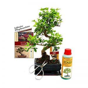 Gift Set Bonsai - Ligustrum - Chinese privet - 6 Years - Beginner Set de la marque Exotenherz image 0 produit