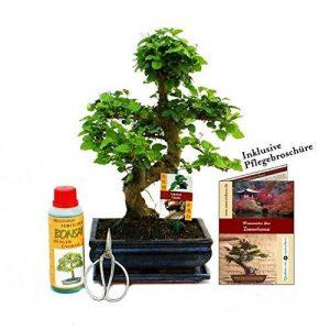 Gift Set Bonsai - Ligustrum - Chinese privet - 8 Years - Beginner Set de la marque Exotenherz image 0 produit