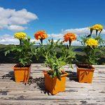 Godets pour semis colorés (x40) de 8x8x7 cm et 4 Clayettes noires de 40x16,5x7 cm (Lxlxh) - Pots en plastiques pour la culture d'extérieur de jeunes pousses, plantes, herbes aromatiques et fleurs. de la marque L'Atelier des Pléiades image 3 produit