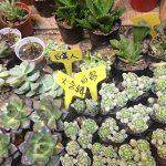 Gosear® Étiquettes de Plante, Gosear 100 Pièces Etiquettes en Plastique Jardin+ Bleu Stylo marqueur,T-Shape plugs Semis Etiquette de la marque Gosear image 4 produit