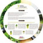 graine herbe jardin TOP 0 image 1 produit