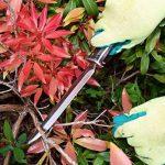 graine jardin japonais TOP 8 image 4 produit
