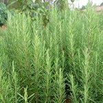 graines pas cher jardin TOP 4 image 1 produit