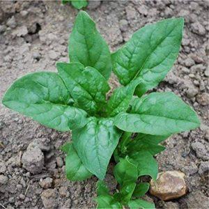 graines pas cher jardin TOP 6 image 0 produit