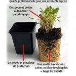 graminée pour jardinière TOP 1 image 1 produit