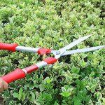 graminée pour jardinière TOP 3 image 3 produit
