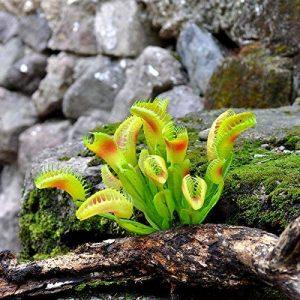 GSYLOL Artificielle Carnivore Herbe Anti Moustiques Mouches Herbe En Pot Plantes Succulentes Maison Jardin Décor de la marque GSYLOL image 0 produit