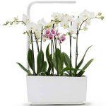 herbes aromatiques potager TOP 10 image 2 produit