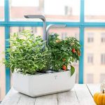 herbes aromatiques potager TOP 7 image 1 produit