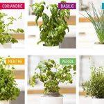 herbes aromatiques potager TOP 9 image 1 produit