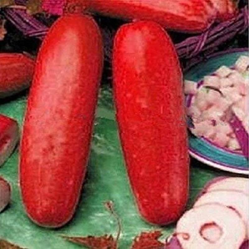 30pcs Sac Graines De Citrouille Rare Melon Bio Graines De Légumes Maison-Jard