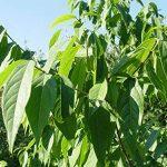 jeunes plants arbustes TOP 1 image 1 produit