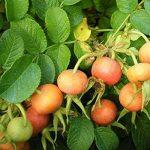 jeunes plants arbustes TOP 2 image 1 produit