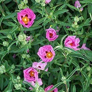 jeunes plants arbustes TOP 5 image 0 produit