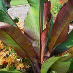 jeunes plants arbustes TOP 7 image 1 produit