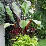 jeunes plants arbustes TOP 7 image 2 produit