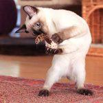 """Jouet pour Chat """"playfun Lot de 5ensemble fait de matériaux de naturel, SISAL Souris, herbe à chat, en bambou de la marque 4yourpet image 4 produit"""