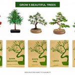 Kit Arbre de Bonsaï Faites grandir votre propre arbre Bonsaï à partir de graines - Cet ensemble cadeau comprend 5 variétés d'arbres à planter - Croissance en intérieur en suivant les instructions étape par étape incluses de la marque Urban Sprout image 1 produit