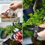 Kit Arbre de Bonsaï Faites grandir votre propre arbre Bonsaï à partir de graines - Cet ensemble cadeau comprend 5 variétés d'arbres à planter - Croissance en intérieur en suivant les instructions étape par étape incluses de la marque Urban Sprout image 4 produit
