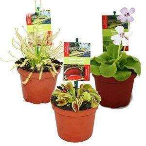 Kit de démarrage des plantes carnivores - 3 de la marque exotenherz.de image 0 produit