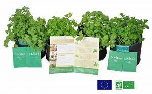 kit herbes aromatiques TOP 11 image 0 produit