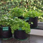 kit herbes aromatiques TOP 11 image 1 produit