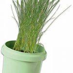 kit herbes aromatiques TOP 3 image 2 produit