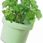 kit herbes aromatiques TOP 3 image 3 produit