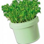 kit herbes aromatiques TOP 3 image 4 produit