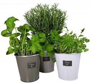 kit herbes aromatiques TOP 4 image 0 produit
