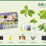 kit herbes aromatiques TOP 6 image 2 produit