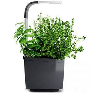 kit herbes aromatiques TOP 9 image 0 produit