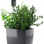 kit herbes aromatiques TOP 9 image 1 produit
