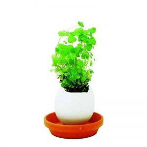 kit plantation herbes aromatiques TOP 0 image 0 produit