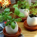 kit plantation herbes aromatiques TOP 0 image 1 produit