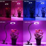 les différentes plantes carnivores TOP 9 image 3 produit