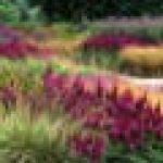 Les Plus beaux jardins de graminées de la marque Philippe Perdereau image 2 produit