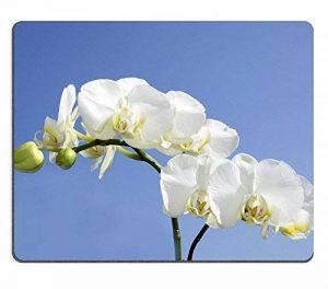 luxlady Gaming Souris en caoutchouc naturel magnifique Orchidée Blanc sur Bleu ciel image d'identité 26270609 de la marque Goobull image 0 produit